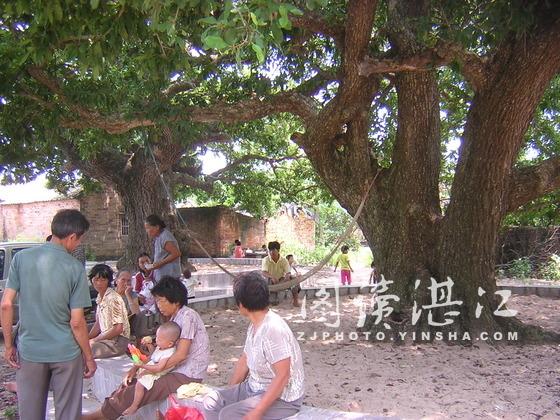 村民在大树下乘凉